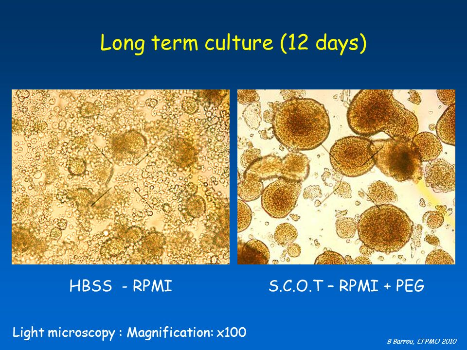 Long term culture (12 days)