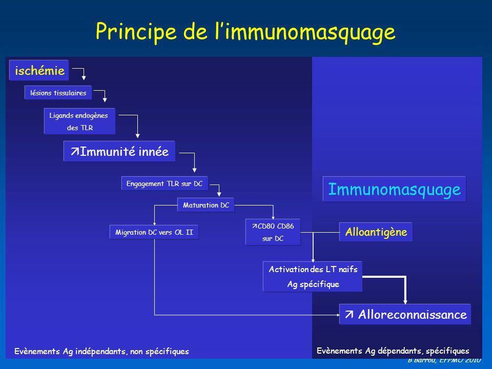 Principe de l'immunomasquage