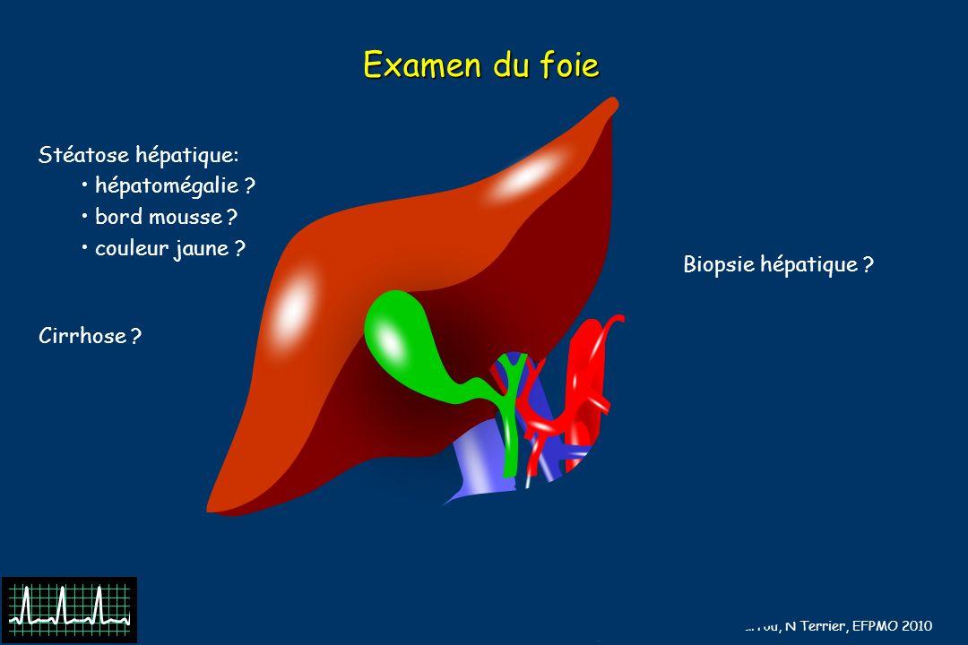 Examen du foie Stéatose hépatique: hépatomégalie bord mousse