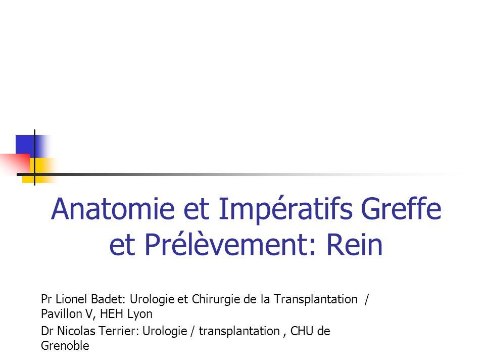 Anatomie et Impératifs Greffe et Prélèvement: Rein