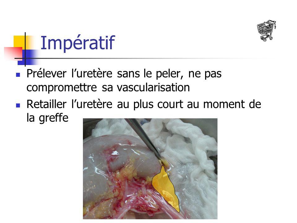 Impératif Prélever l'uretère sans le peler, ne pas compromettre sa vascularisation.