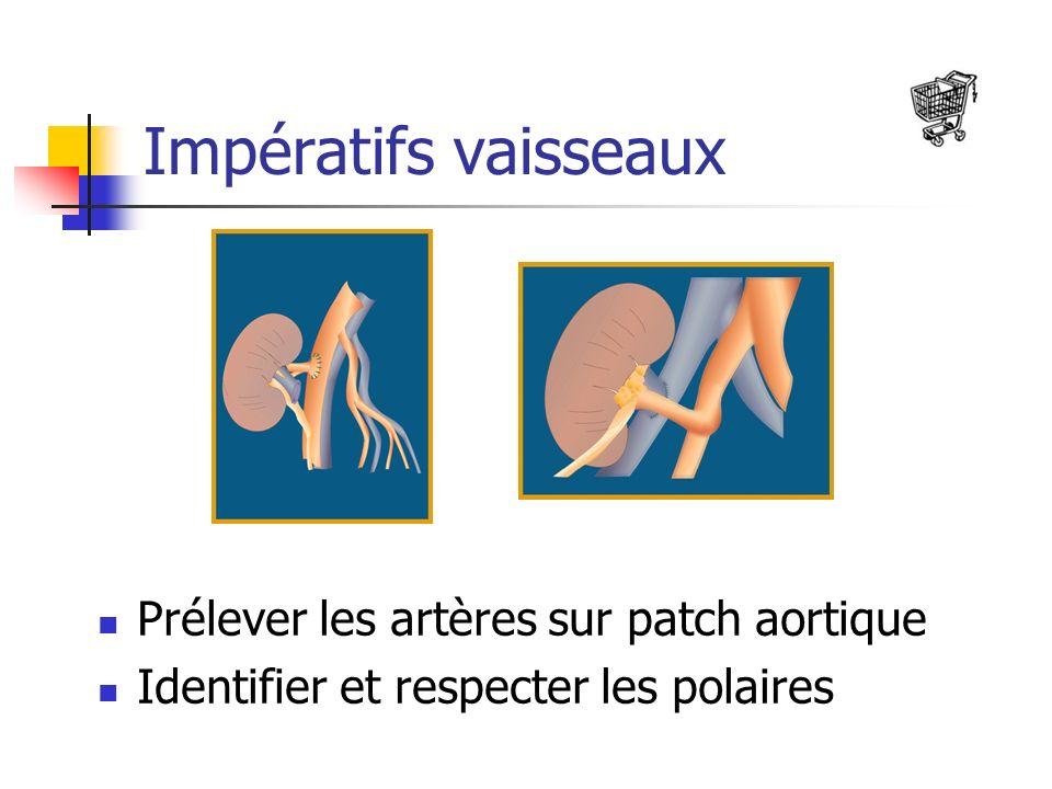 Impératifs vaisseaux Prélever les artères sur patch aortique