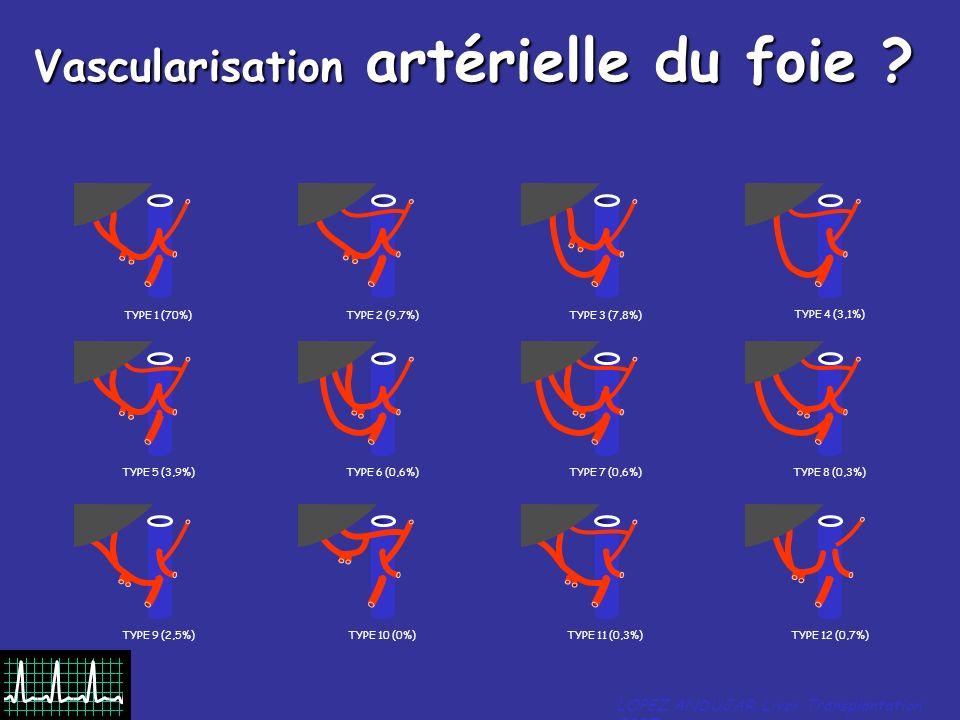 Vascularisation artérielle du foie