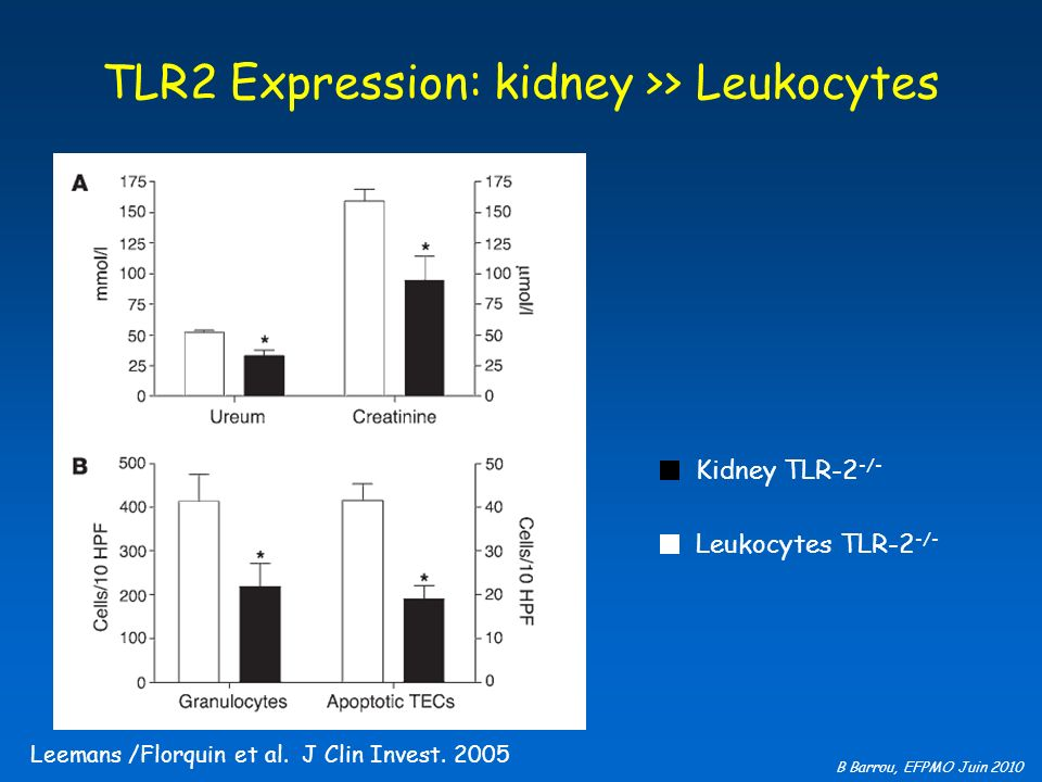 TLR2 Expression: kidney >> Leukocytes