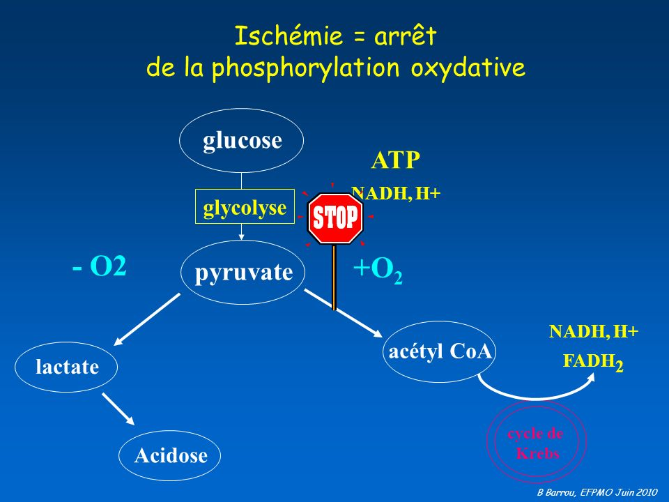Ischémie = arrêt de la phosphorylation oxydative