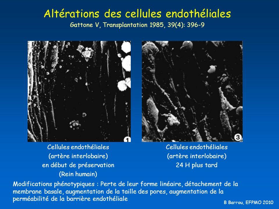 Altérations des cellules endothéliales Gattone V, Transplantation 1985, 39(4): 396-9