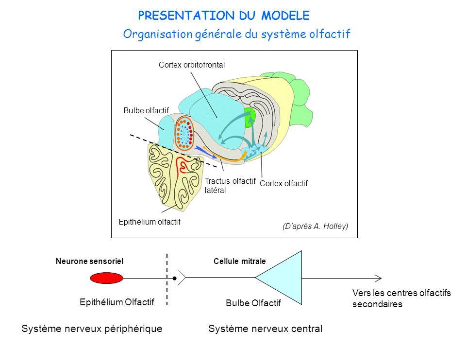 PRESENTATION DU MODELE