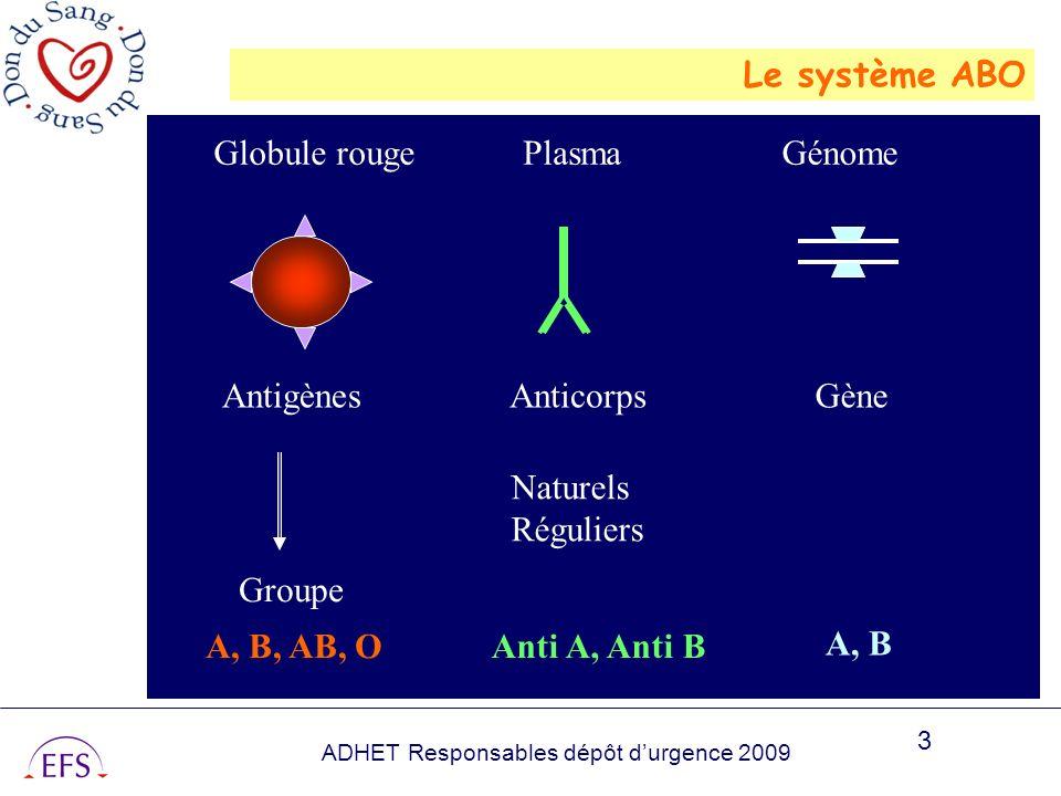 Le système ABO Globule rouge. Plasma. Génome. Antigènes. Anticorps. Gène. Naturels. Réguliers.