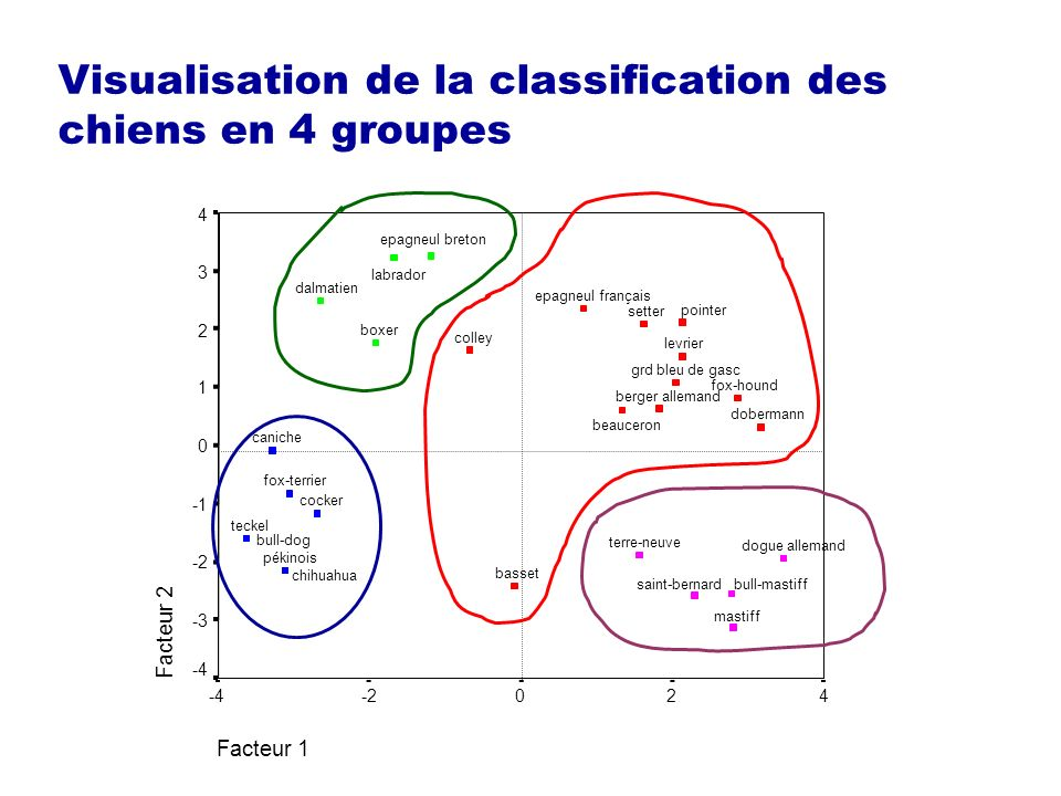 Visualisation de la classification des chiens en 4 groupes