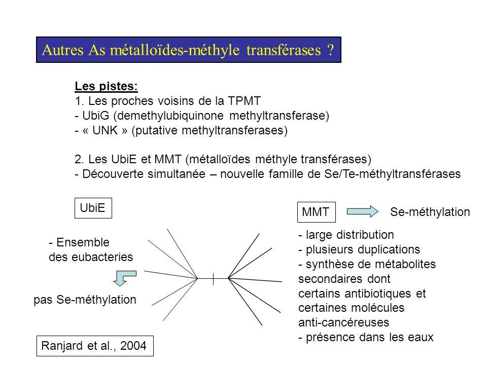 Autres As métalloïdes-méthyle transférases