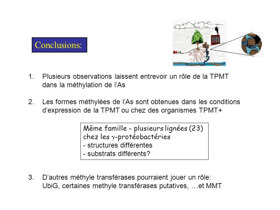 Conclusions: Plusieurs observations laissent entrevoir un rôle de la TPMT. dans la méthylation de l'As.