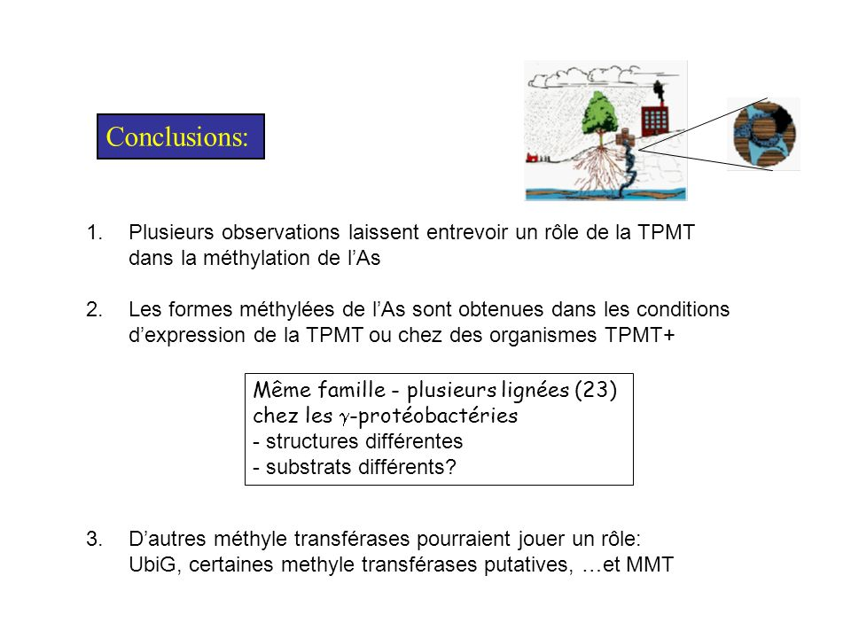 Conclusions:Plusieurs observations laissent entrevoir un rôle de la TPMT. dans la méthylation de l'As.