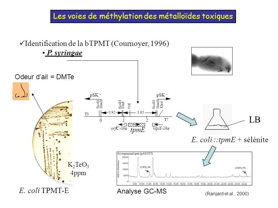 Les voies de méthylation des métalloïdes toxiques
