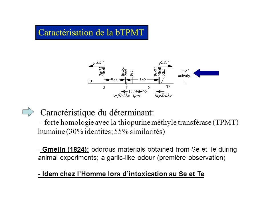 Caractérisation de la bTPMT