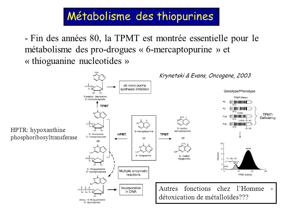 Métabolisme des thiopurines
