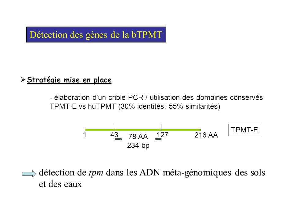 Détection des gènes de la bTPMT