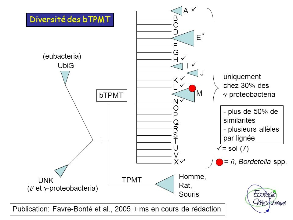 Diversité des bTPMT A B C D E * F G (eubacteria) H UbiG I J uniquement