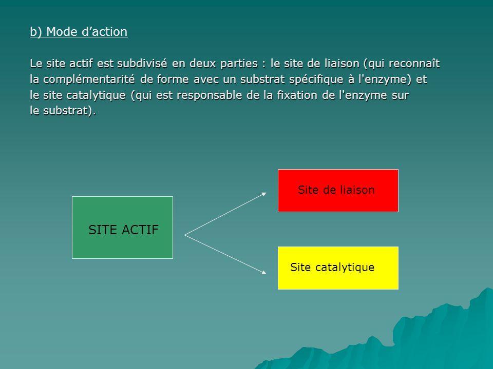 SITE ACTIF b) Mode d'action