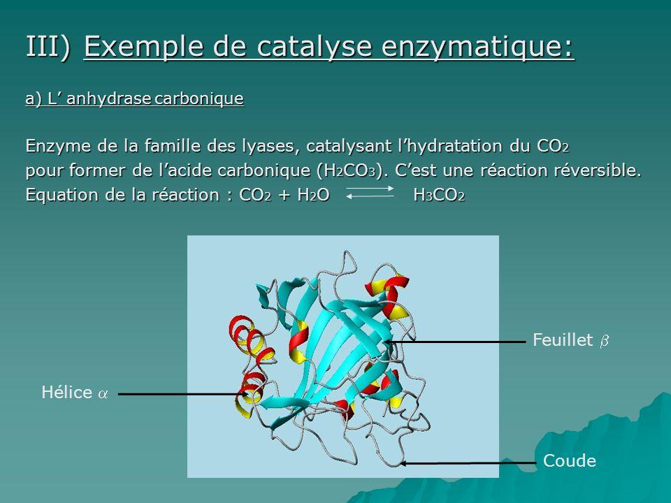 III) Exemple de catalyse enzymatique: