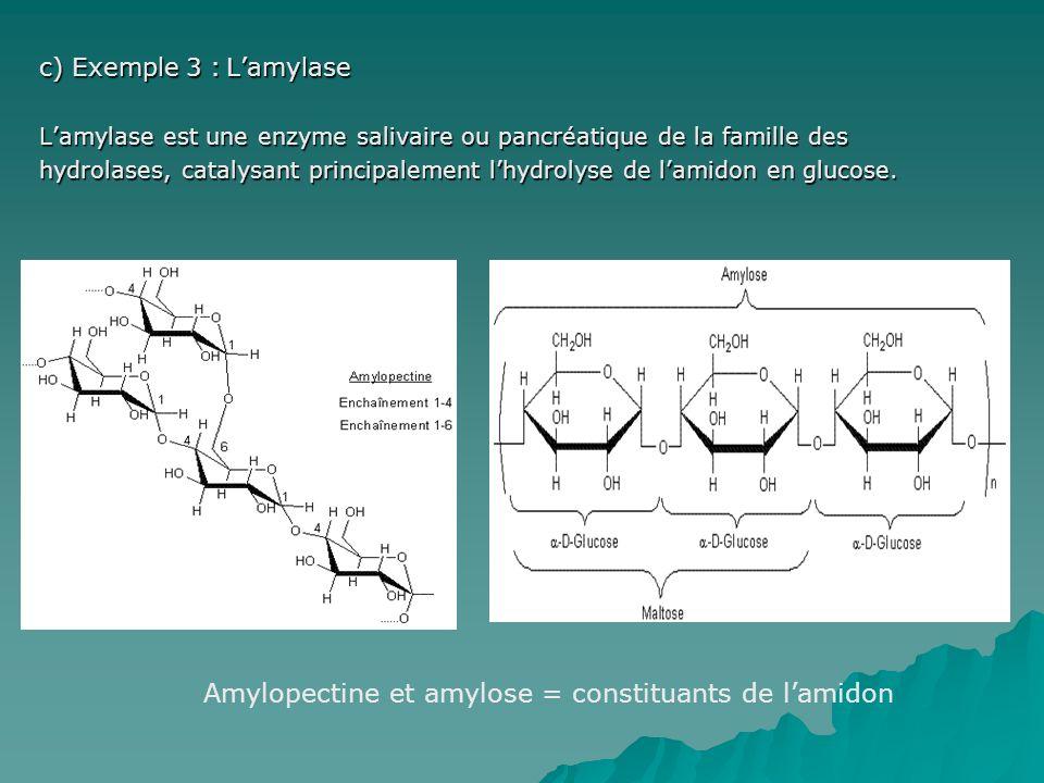 Amylopectine et amylose = constituants de l'amidon