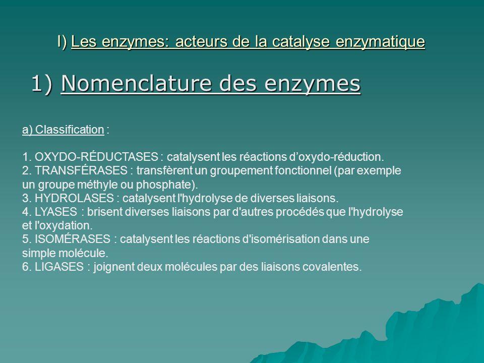 I) Les enzymes: acteurs de la catalyse enzymatique