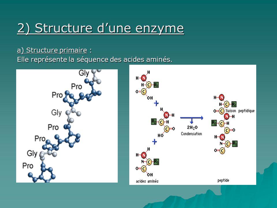 2) Structure d'une enzyme