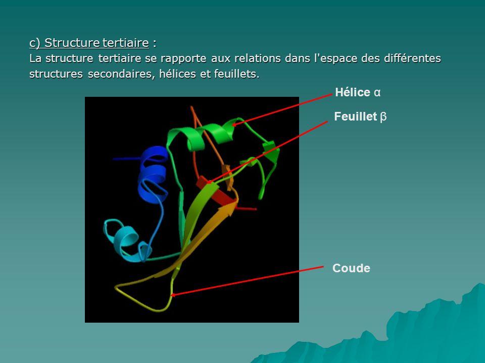 Hélice α Feuillet β Coude c) Structure tertiaire :