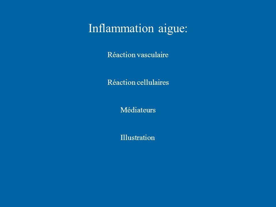 Inflammation aigue: Réaction vasculaire Réaction cellulaires
