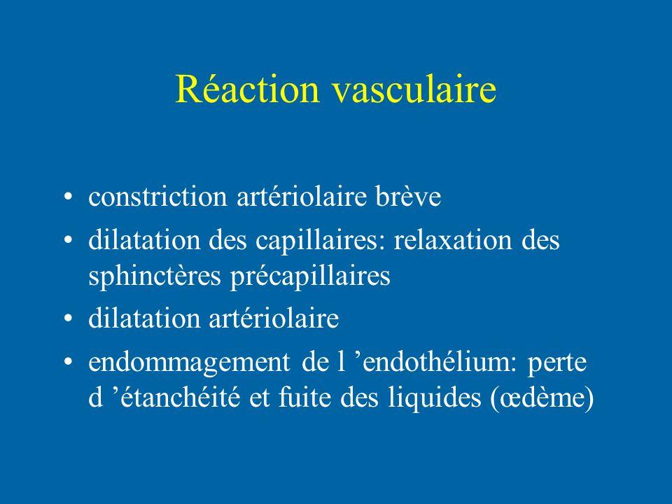 Réaction vasculaire constriction artériolaire brève