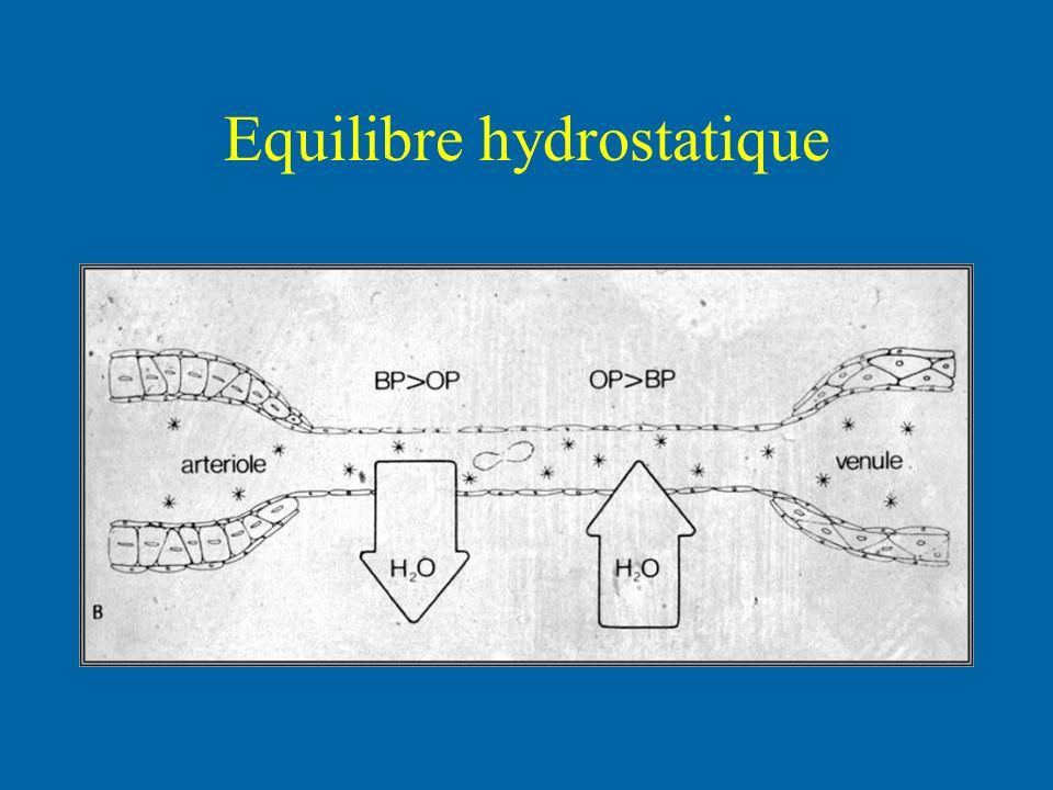 Equilibre hydrostatique