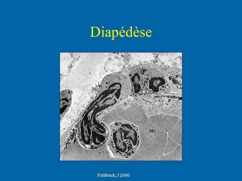 Diapédèse Fishback, J 2000