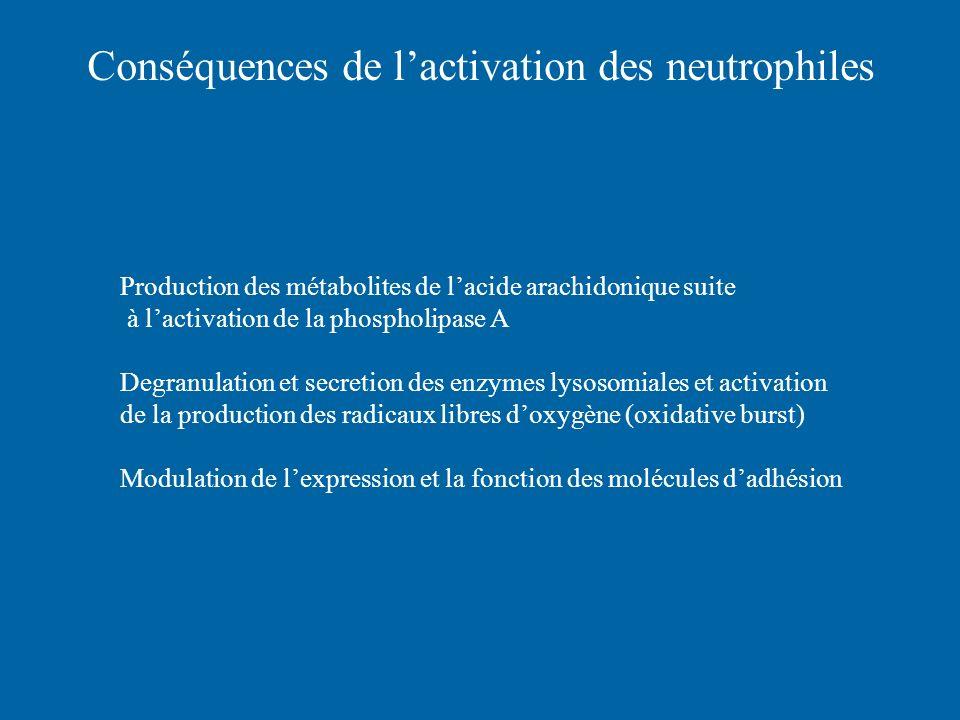 Conséquences de l'activation des neutrophiles