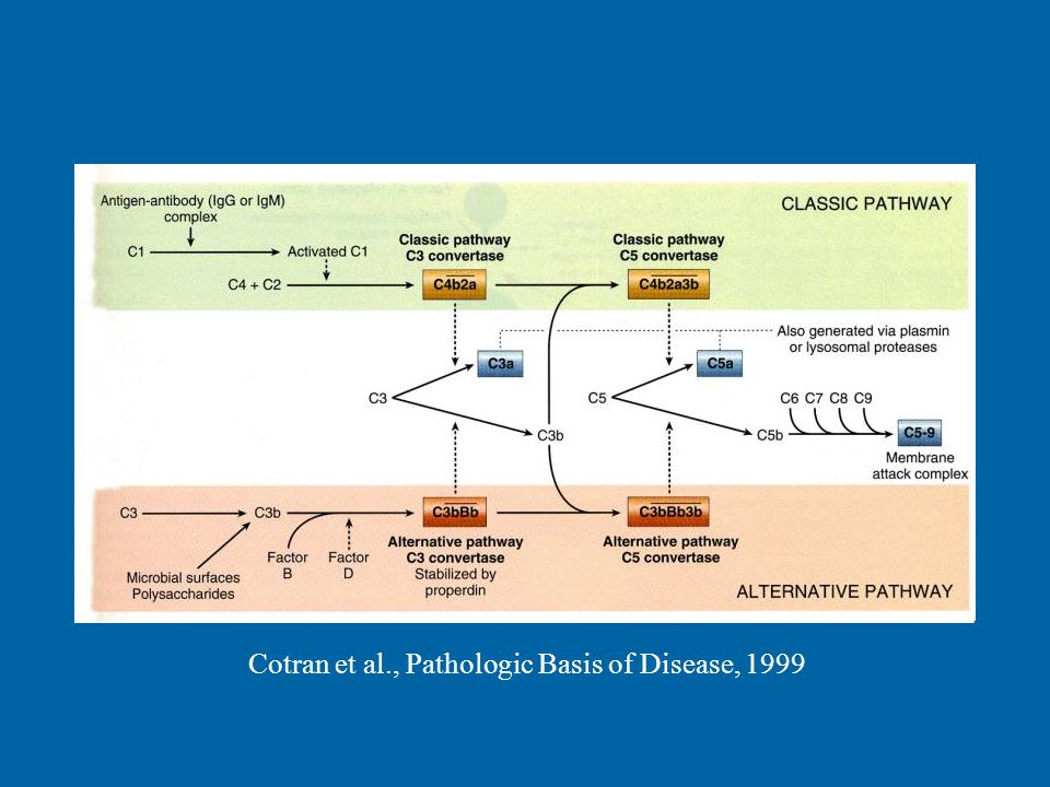 Cotran et al., Pathologic Basis of Disease, 1999