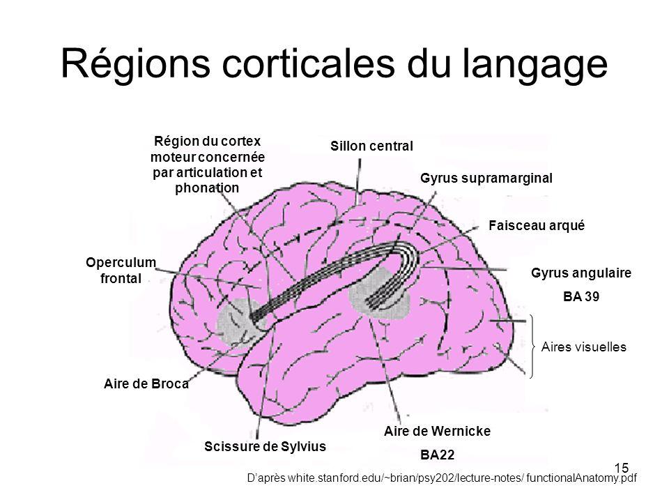 Régions corticales du langage