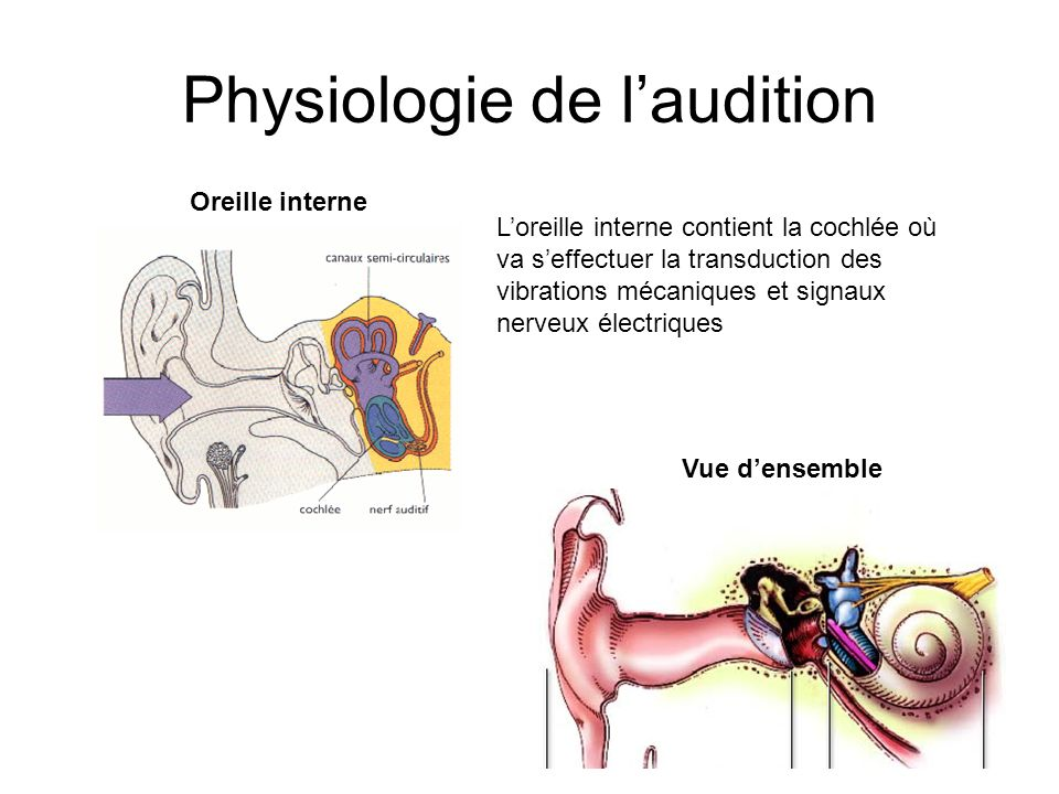 Physiologie de l'audition