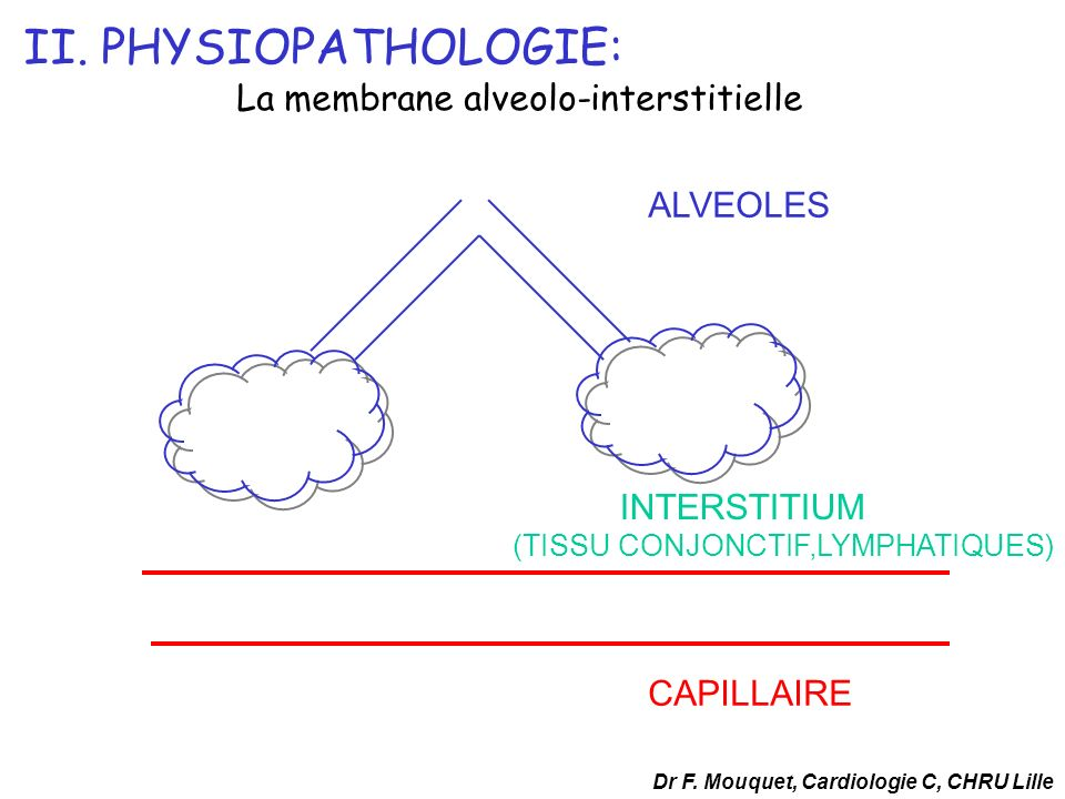 II. PHYSIOPATHOLOGIE: La membrane alveolo-interstitielle ALVEOLES