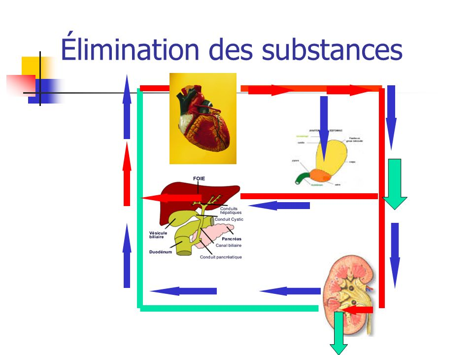 Élimination des substances