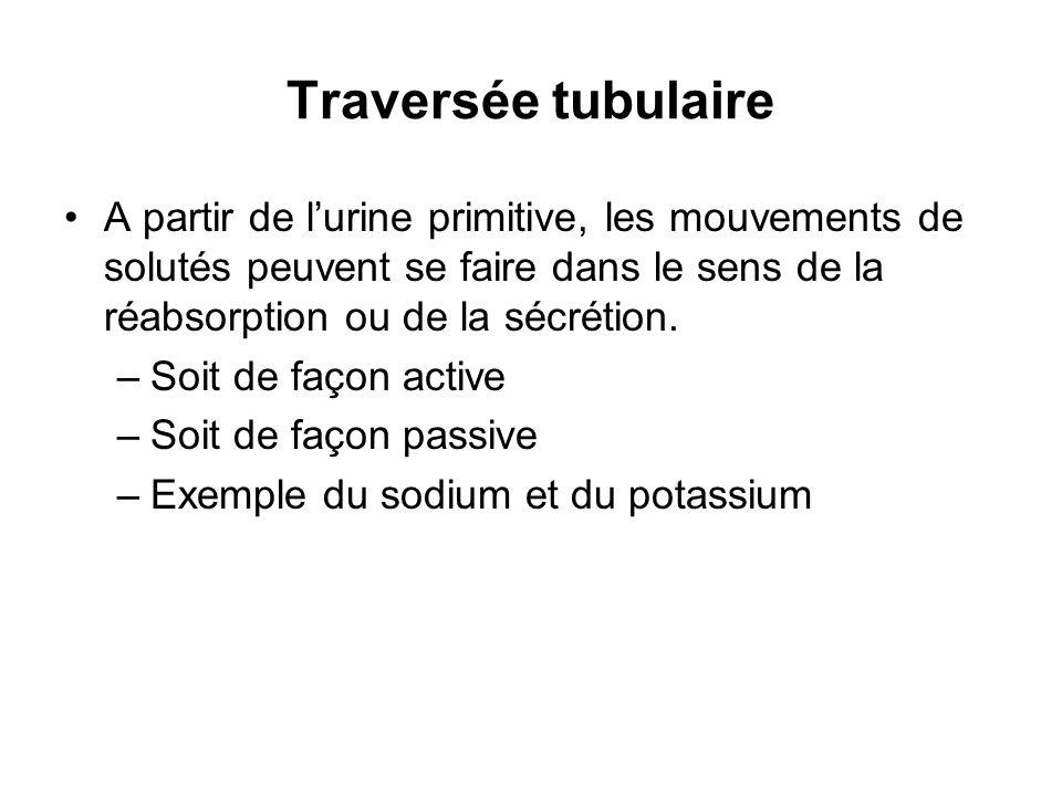 Traversée tubulaire A partir de l'urine primitive, les mouvements de solutés peuvent se faire dans le sens de la réabsorption ou de la sécrétion.