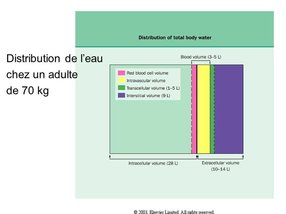 Distribution de l'eau chez un adulte de 70 kg