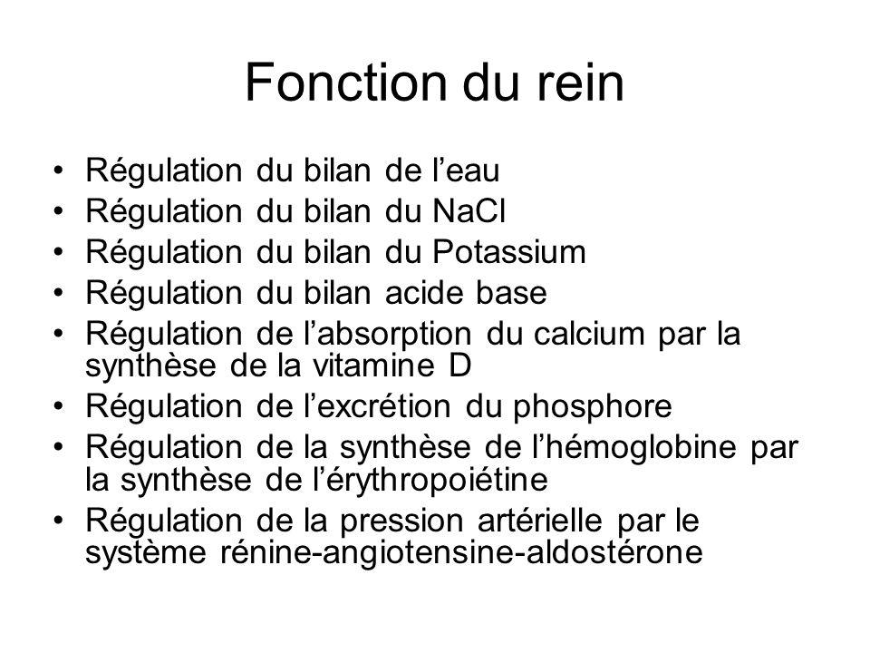 Fonction du rein Régulation du bilan de l'eau