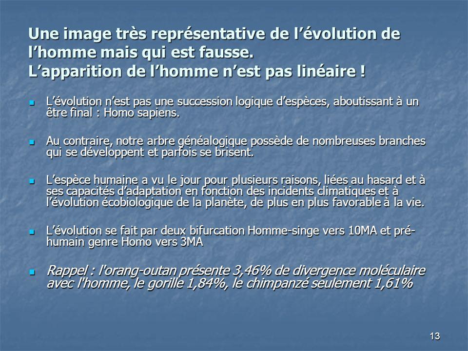 Une image très représentative de l'évolution de l'homme mais qui est fausse. L'apparition de l'homme n'est pas linéaire !