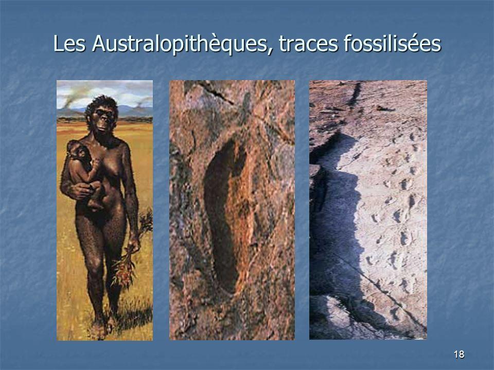 Les Australopithèques, traces fossilisées
