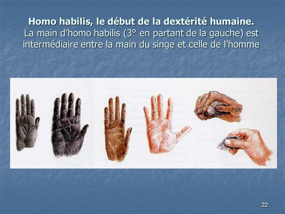 Homo habilis, le début de la dextérité humaine