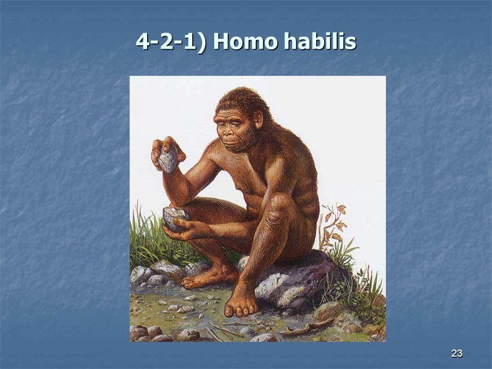 4-2-1) Homo habilis