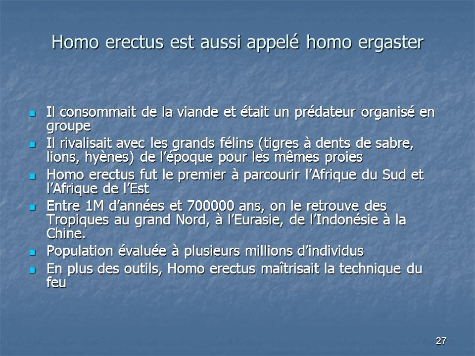 Homo erectus est aussi appelé homo ergaster