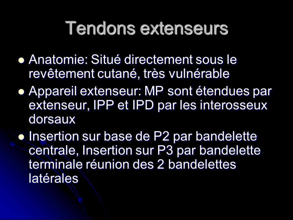 Tendons extenseursAnatomie: Situé directement sous le revêtement cutané, très vulnérable.