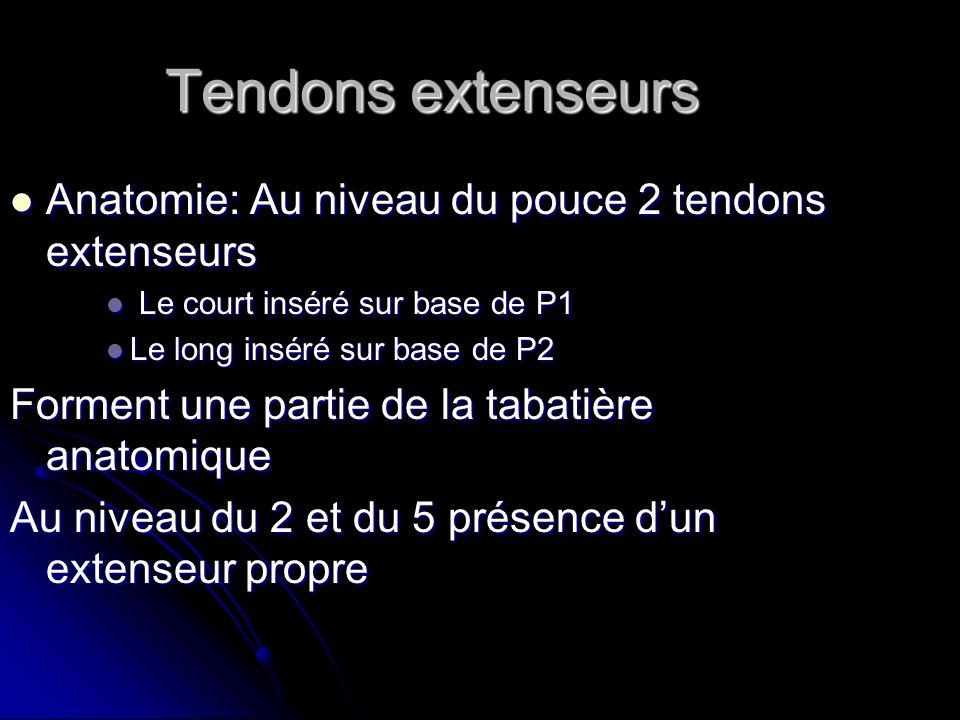 Tendons extenseurs Anatomie: Au niveau du pouce 2 tendons extenseurs