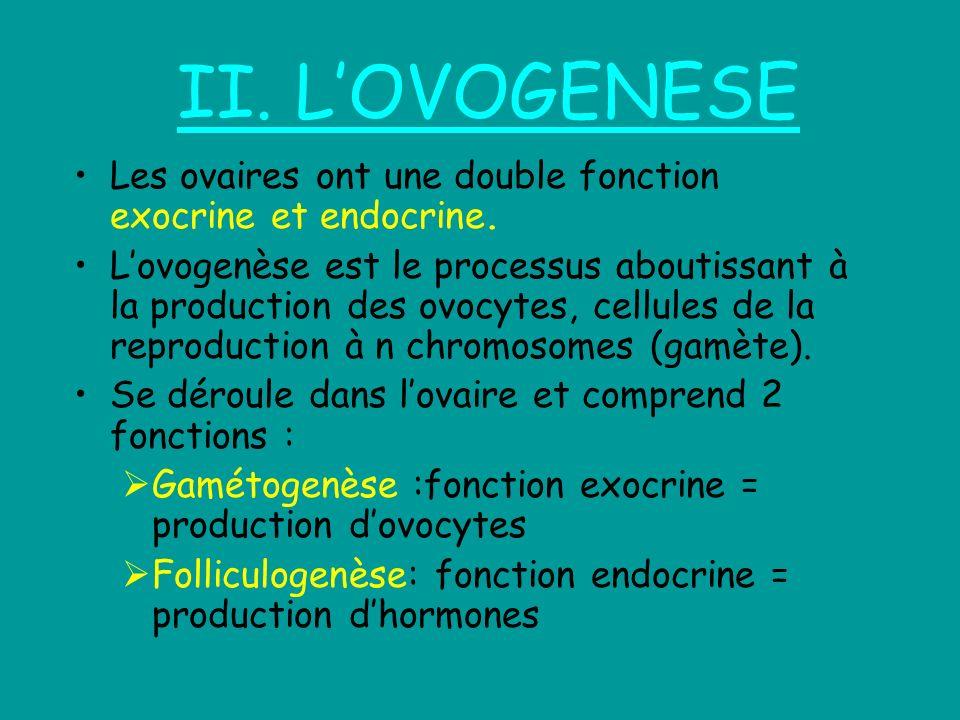II. L'OVOGENESE Les ovaires ont une double fonction exocrine et endocrine.