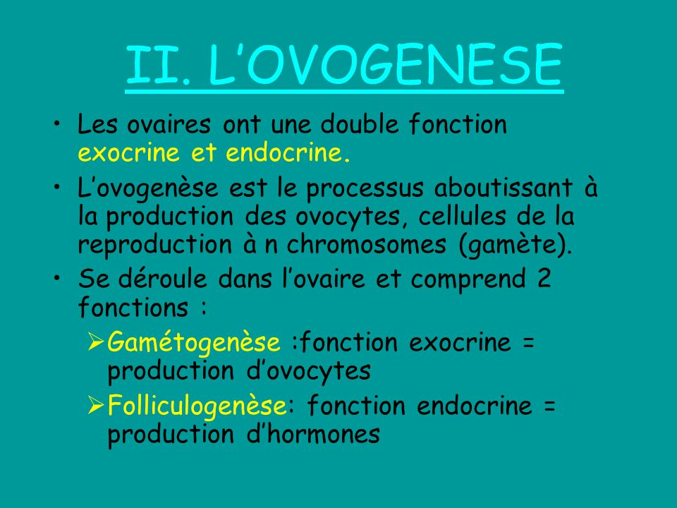 II. L'OVOGENESELes ovaires ont une double fonction exocrine et endocrine.