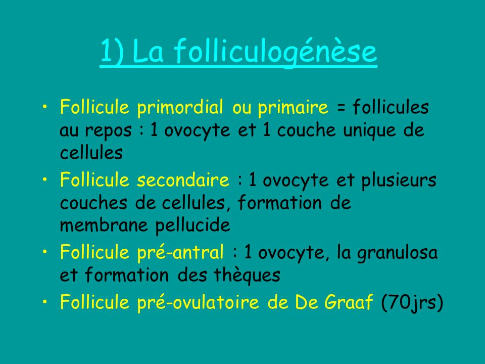 1) La folliculogénèseFollicule primordial ou primaire = follicules au repos : 1 ovocyte et 1 couche unique de cellules.